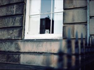 edinburgh cat